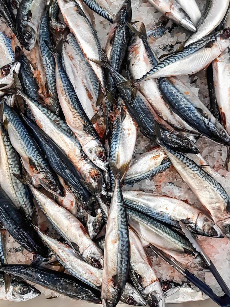 färsk fiskbakgrund på is i skaldjursmarknadsstånd foto