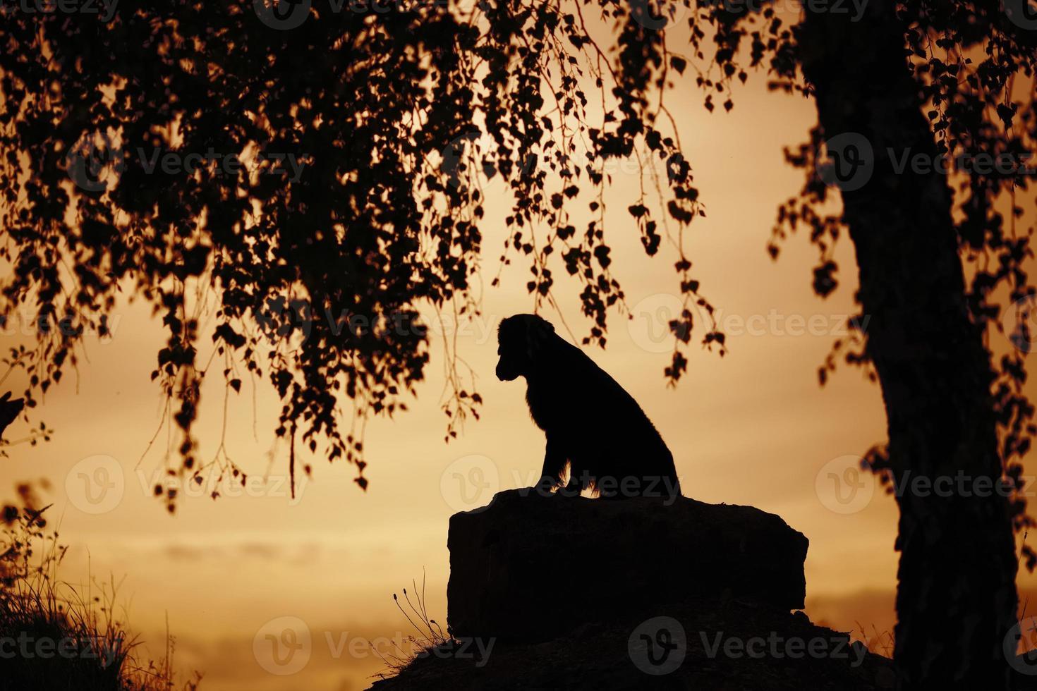 hund sitter under ett träd på kvällen foto