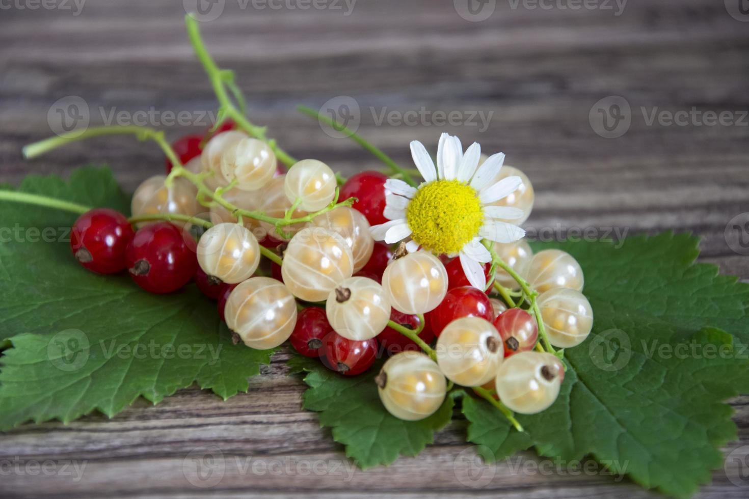 vinbär närbild. röda och vita vinbär med kamomillblommor på en träbakgrund. foto