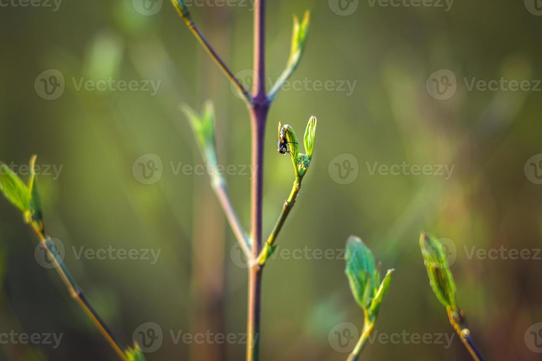 träd blommar på våren. grenar av ett träd med små gröna blad. bakgrund ljusgrön. frontvy foto