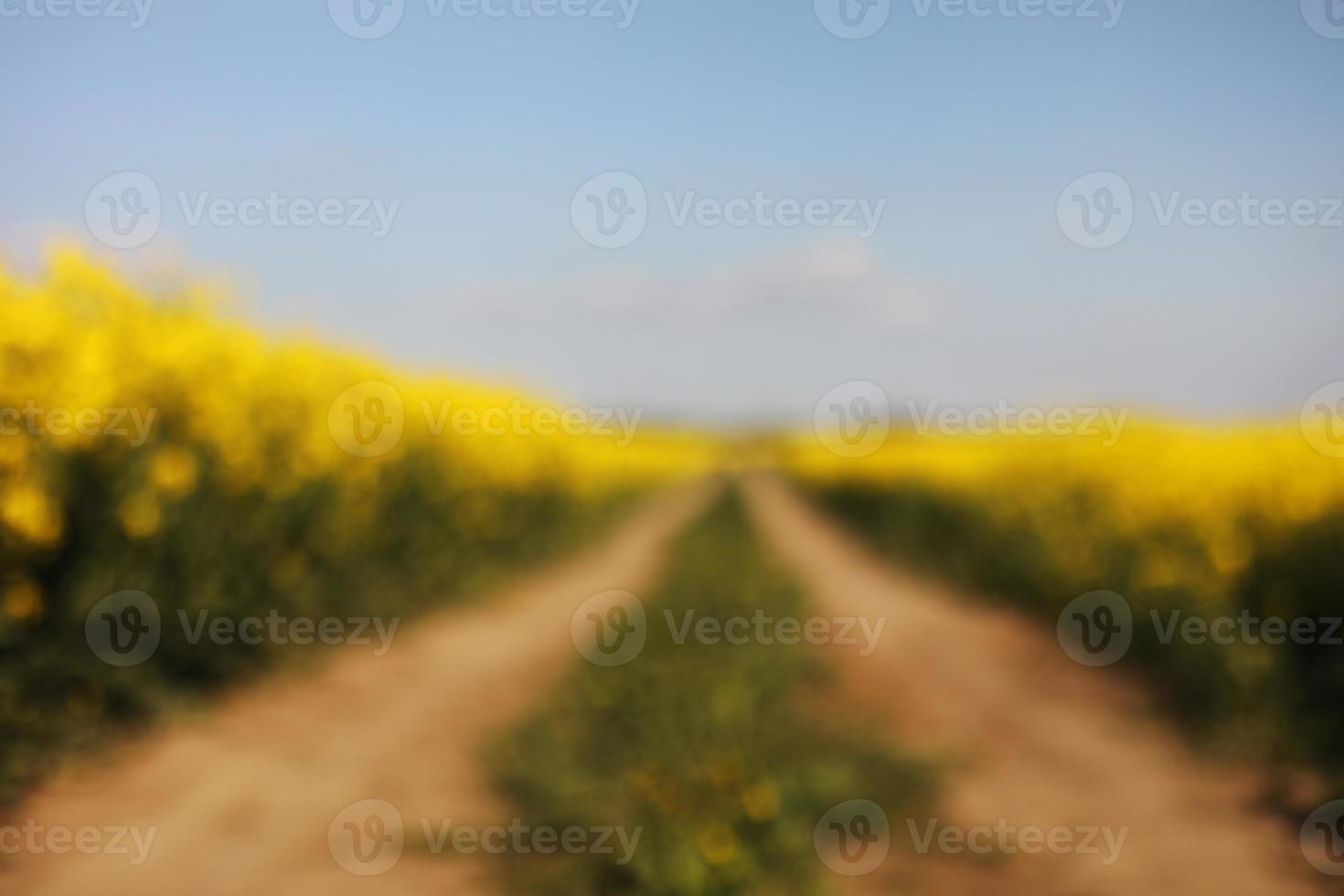 suddig bakgrund av gult raps på en bakgrund av himlen. selektivt fokus på färg. rapsfält med mogen raps, jordbruksbakgrund foto