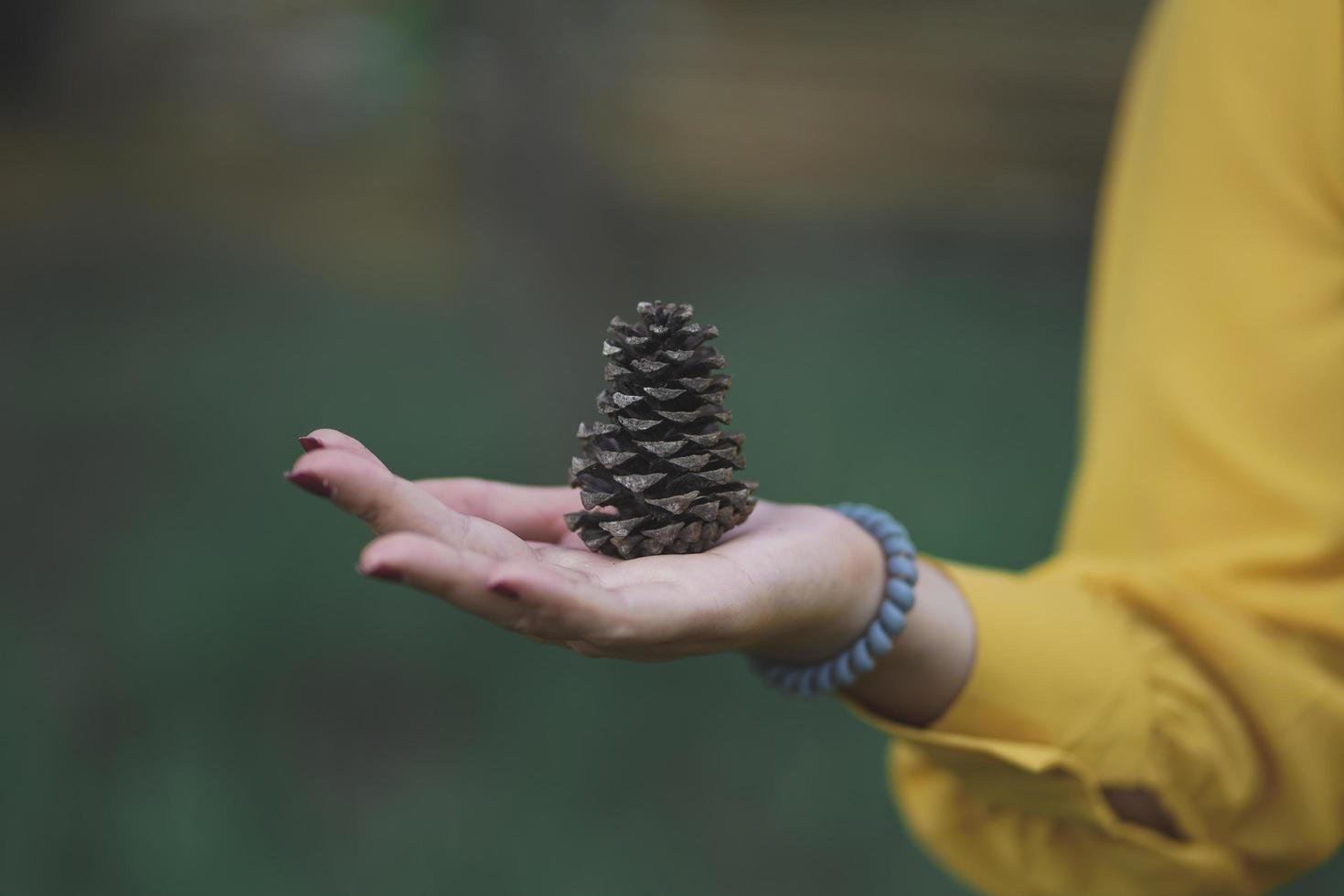 ung hipster kaukasisk kvinna håller tallkotte i skogen foto