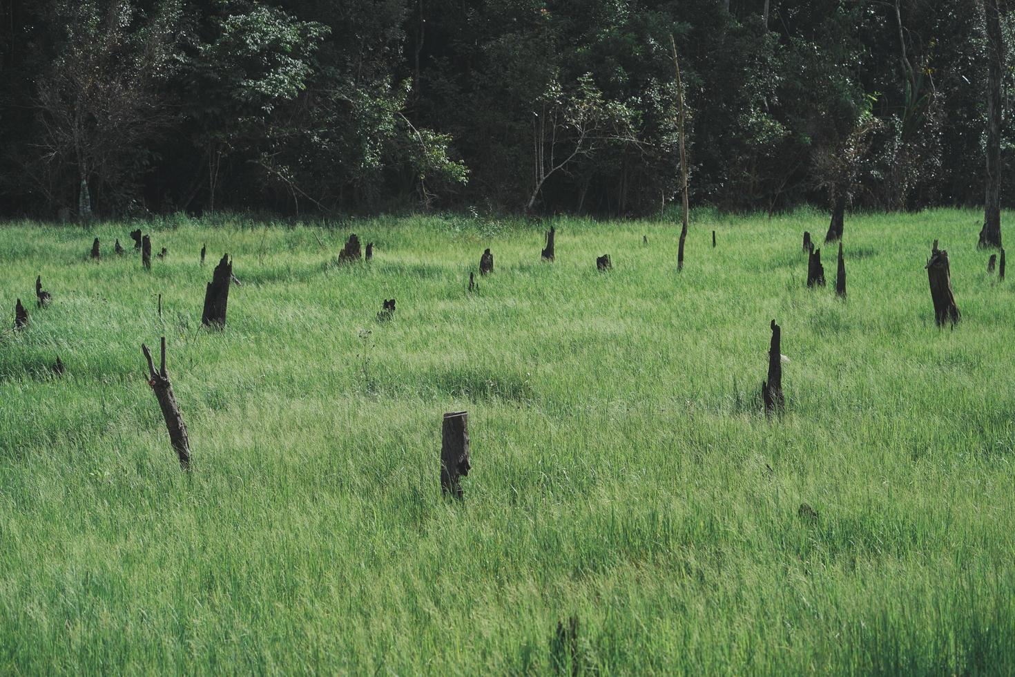 utsikt över gröna frodiga ängar och skogsträd foto