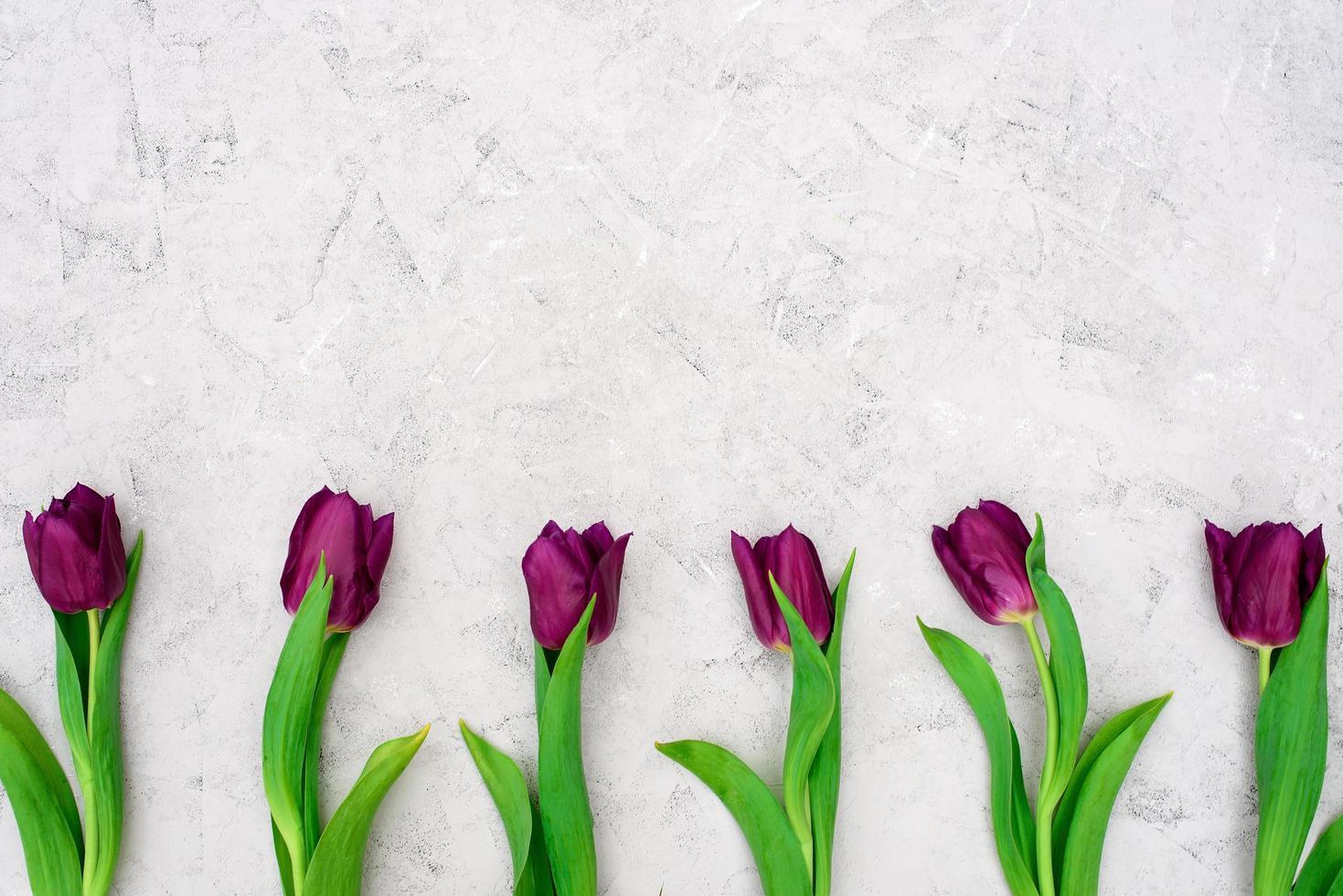 rad med lila vår tulpan blommor mot en ljus sten bakgrund. platt låg. kopiera utrymme. mors dag. internationella kvinnodagen. foto