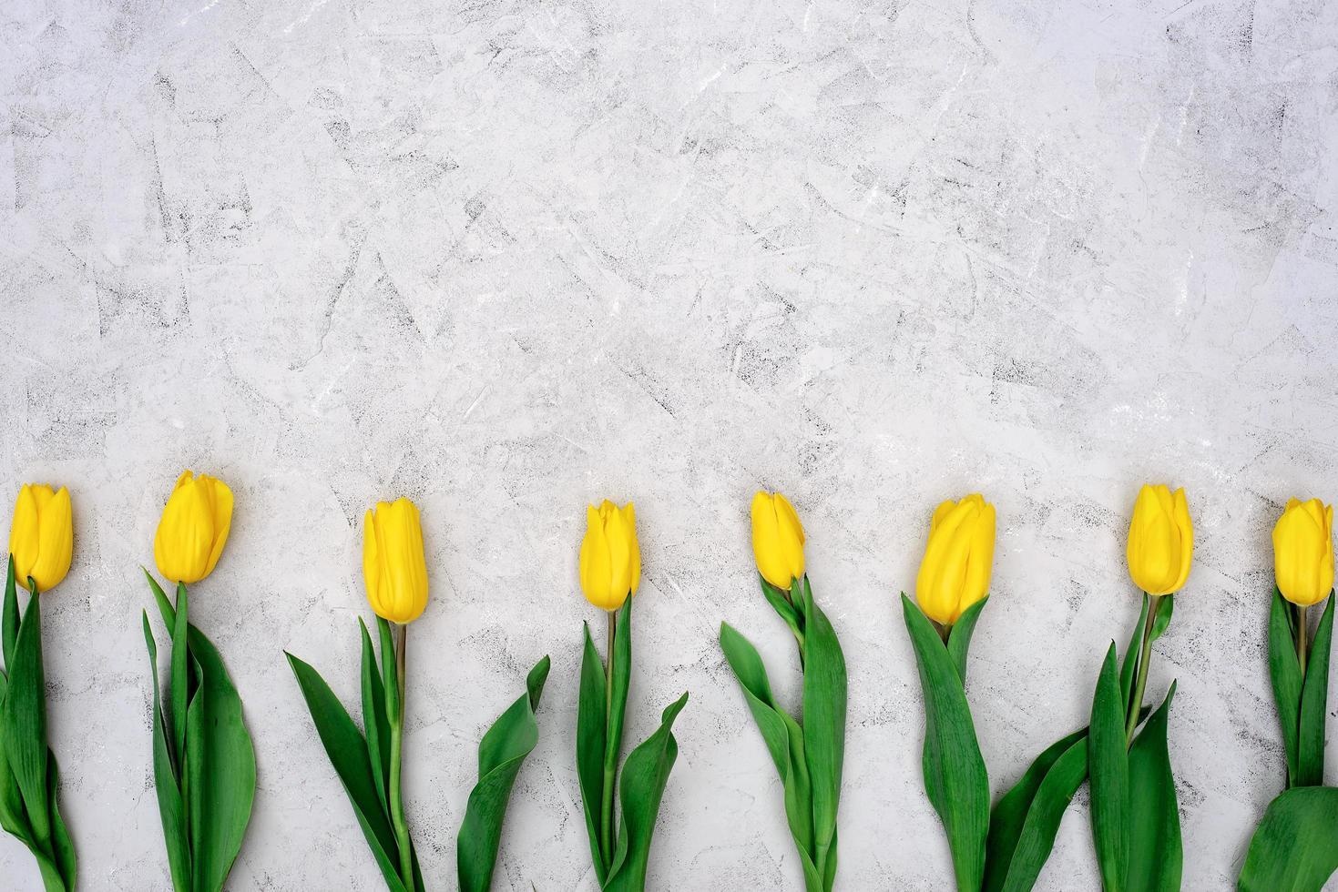 en rad med gula vårtulpanblommor på en ljus stenbakgrund. platt låg. kopiera utrymme. mors dag. internationella kvinnodagen. foto