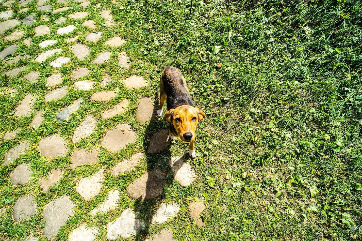 hemlös söt hund foto