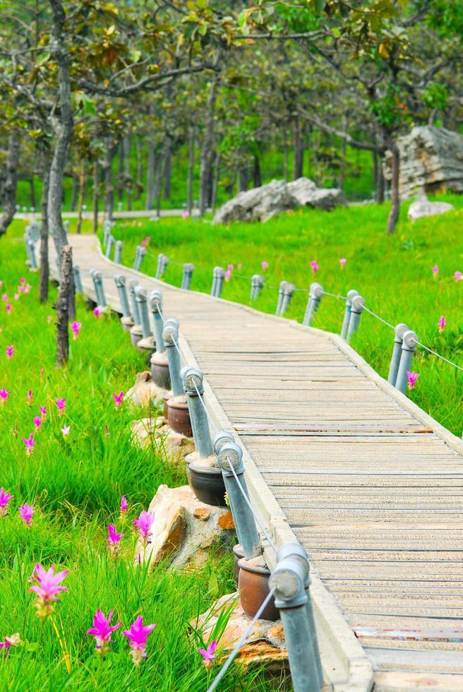 gångväg för siam tulpaner blommande fält foto