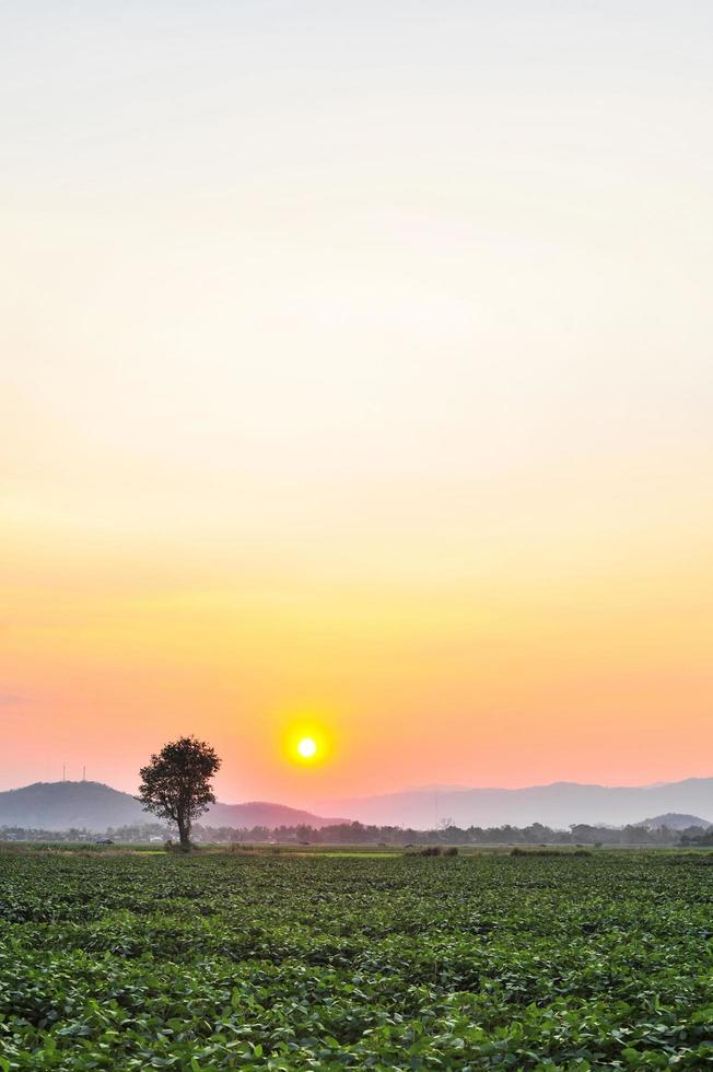 solnedgång vid trädgårdens naturliga bakgrund foto