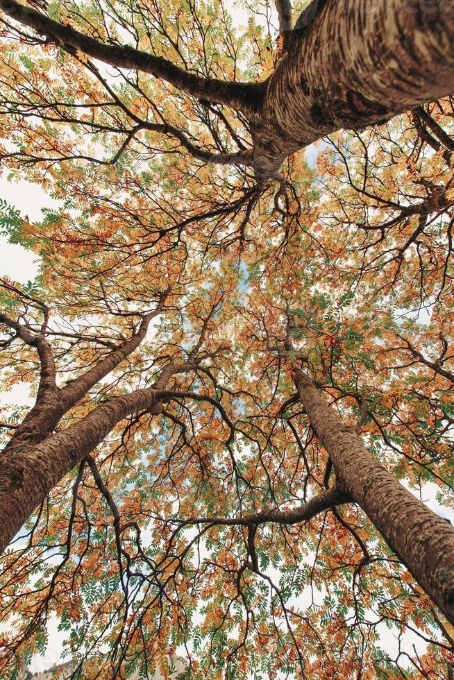 höstväxter med färgglatt lövverk hämtat underifrån foto