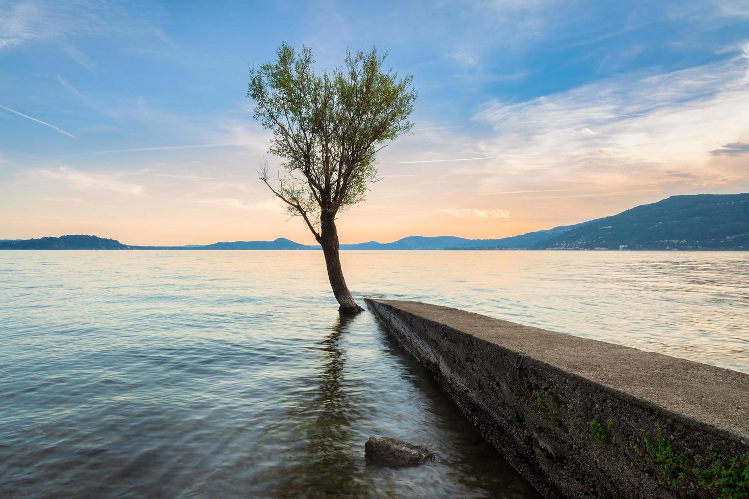 enda träd med reflektion i sjön vid solnedgången foto