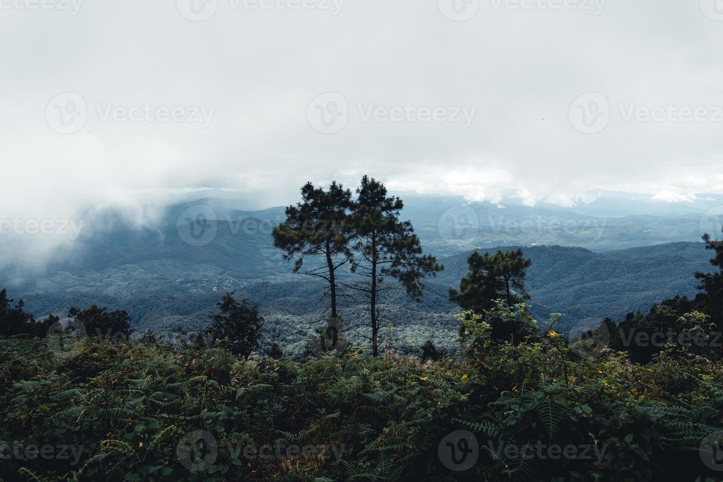 berg och gröna träd under dagen foto