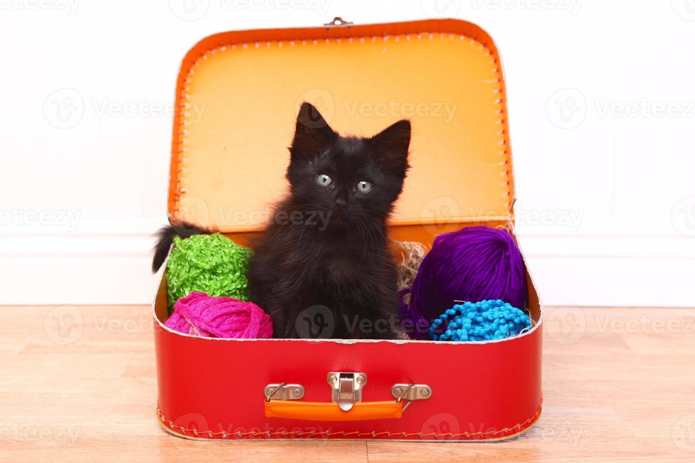 kattunge i ett fodral fyllt med garn foto