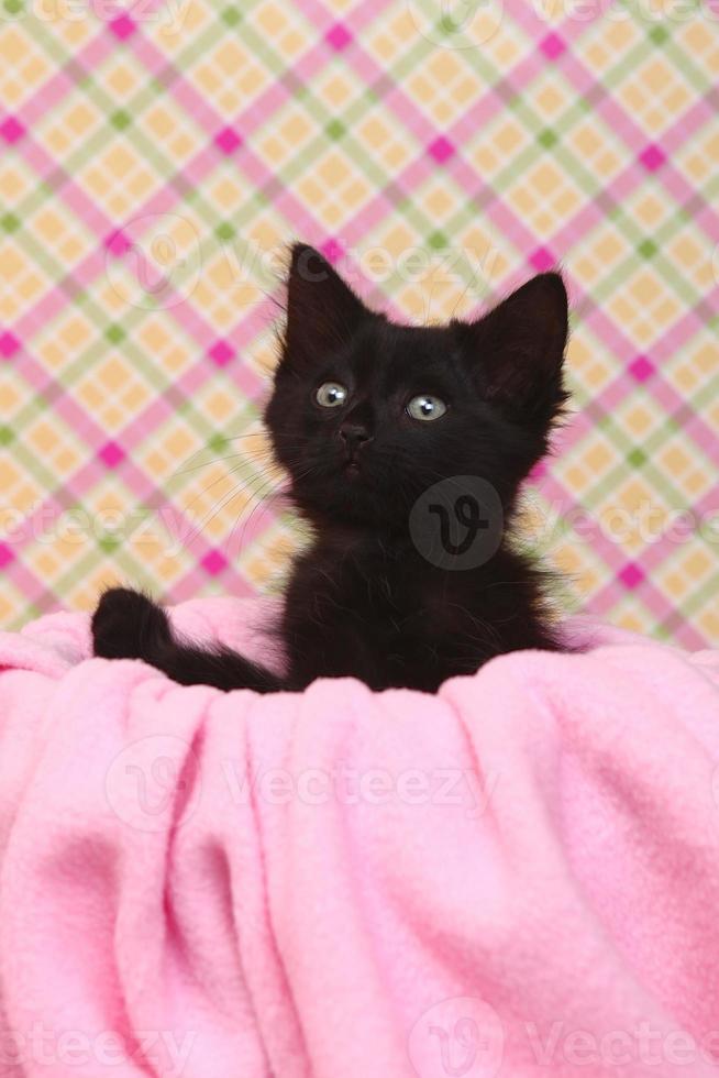 nyfiken kattunge på en rosa mjuk bakgrund foto