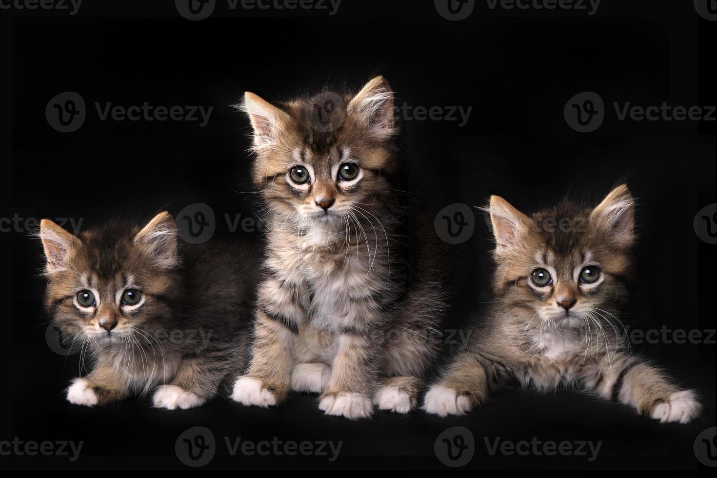 tre bedårande kattunge med stora ögon foto