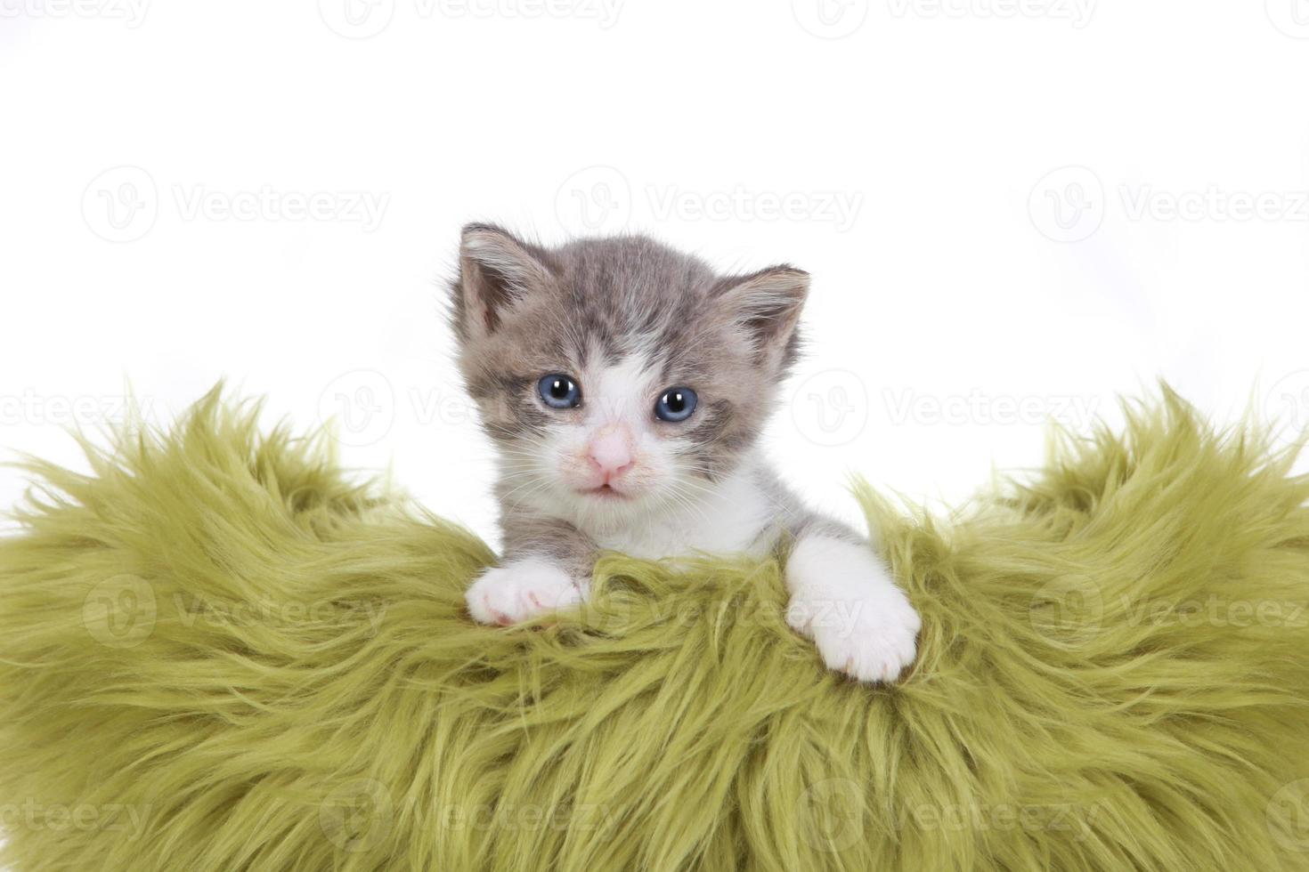 kattunge porträtt i studio på vit bakgrund foto