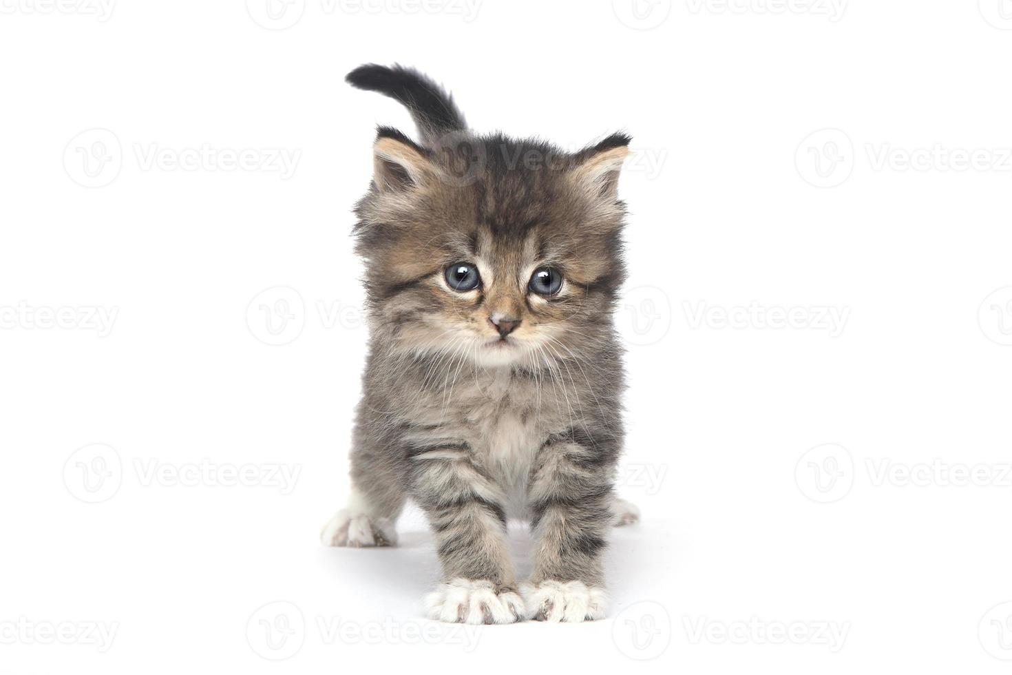 söt liten kattunge på en vit bakgrund foto