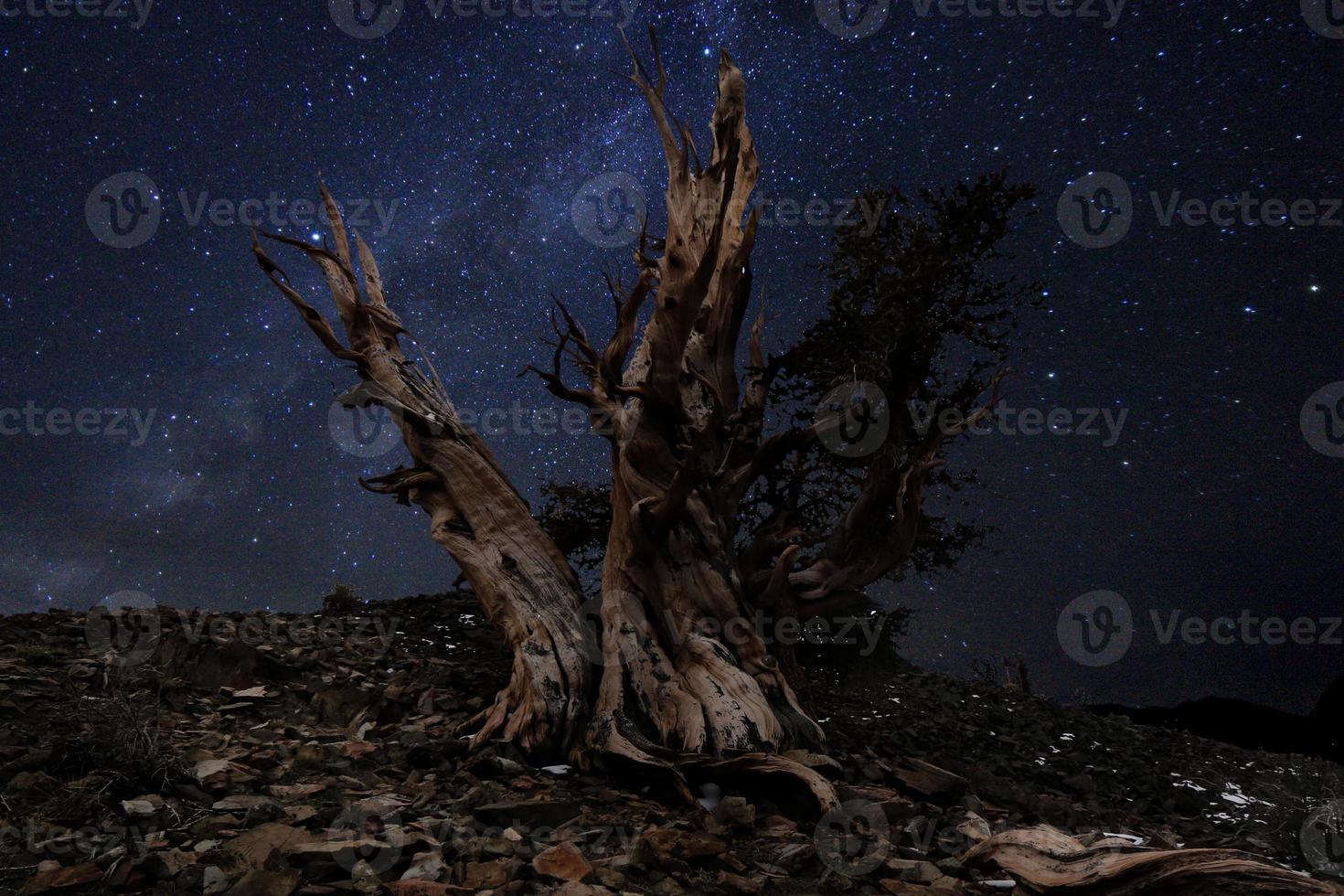 ljusmålat landskap av stjärnor i tallar med borst foto