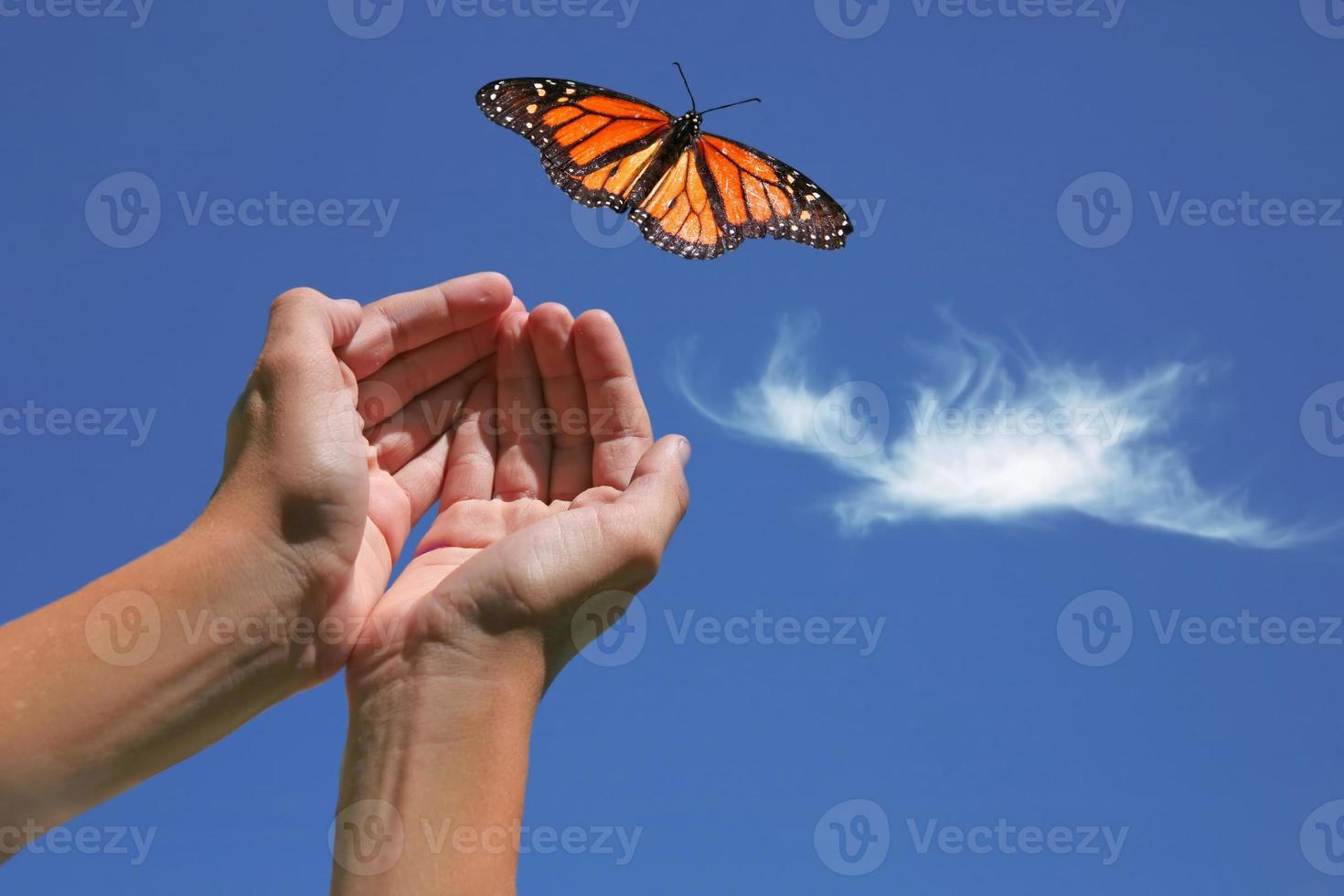 monarkfjäril släppt foto