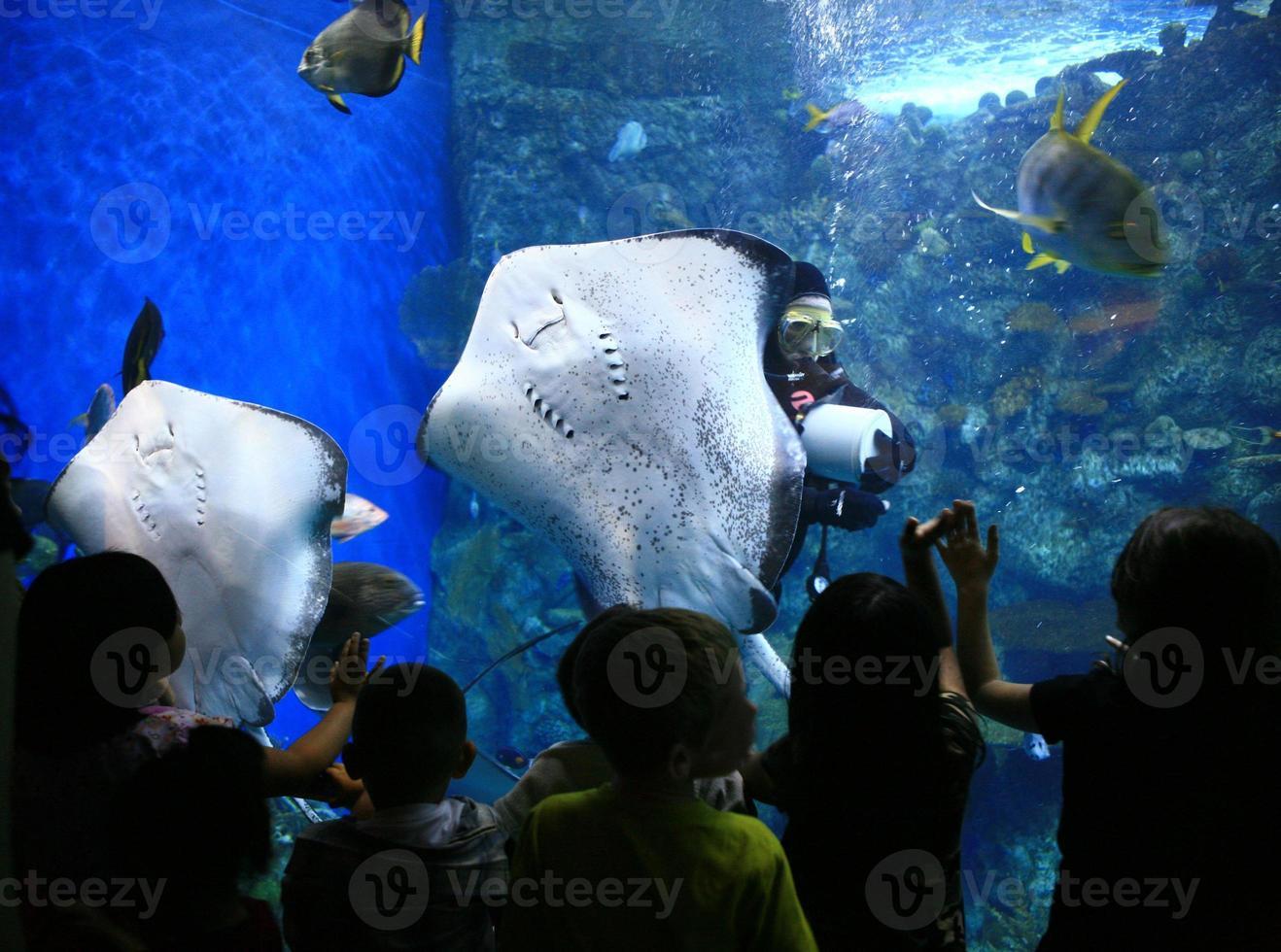 strålar i ett gigantiskt akvarium med barn som tittar foto