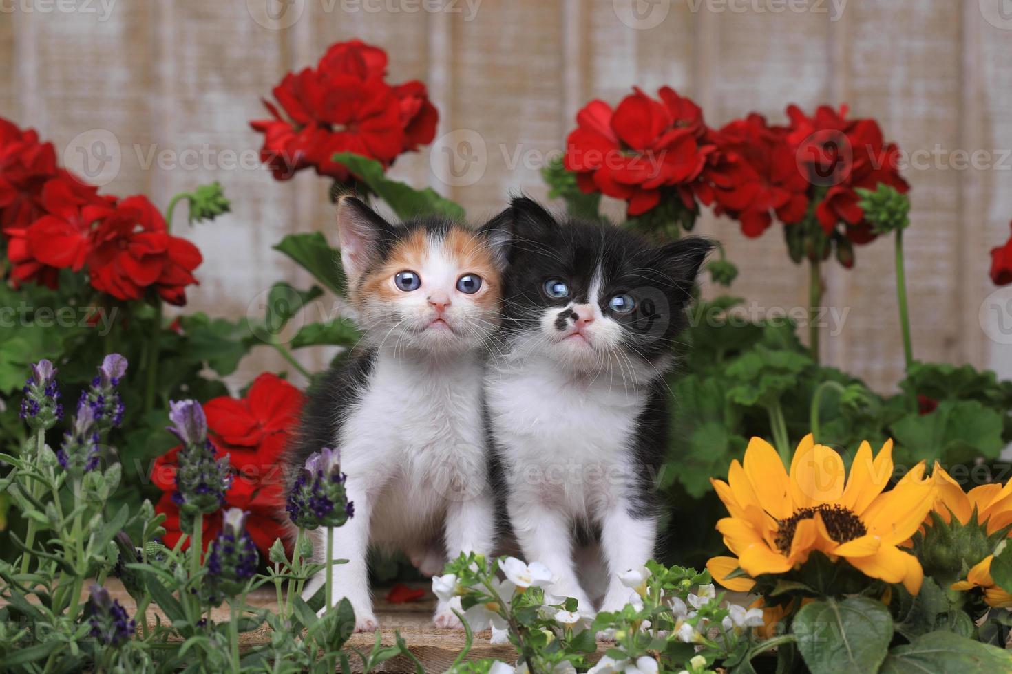 söta 3 veckor gamla kattungar i trädgårdsmiljö foto