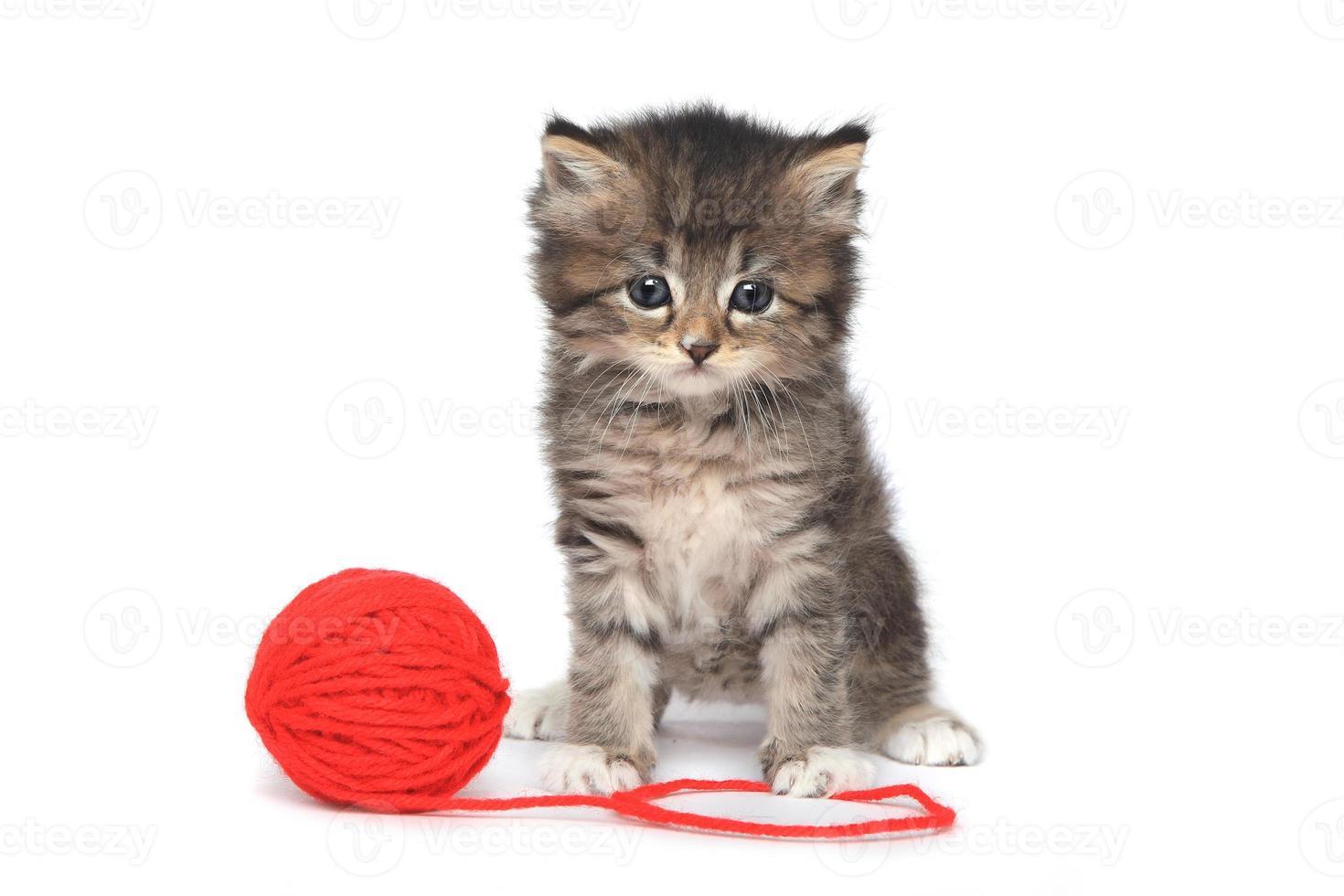 lekfull kattunge med röd boll av garn foto
