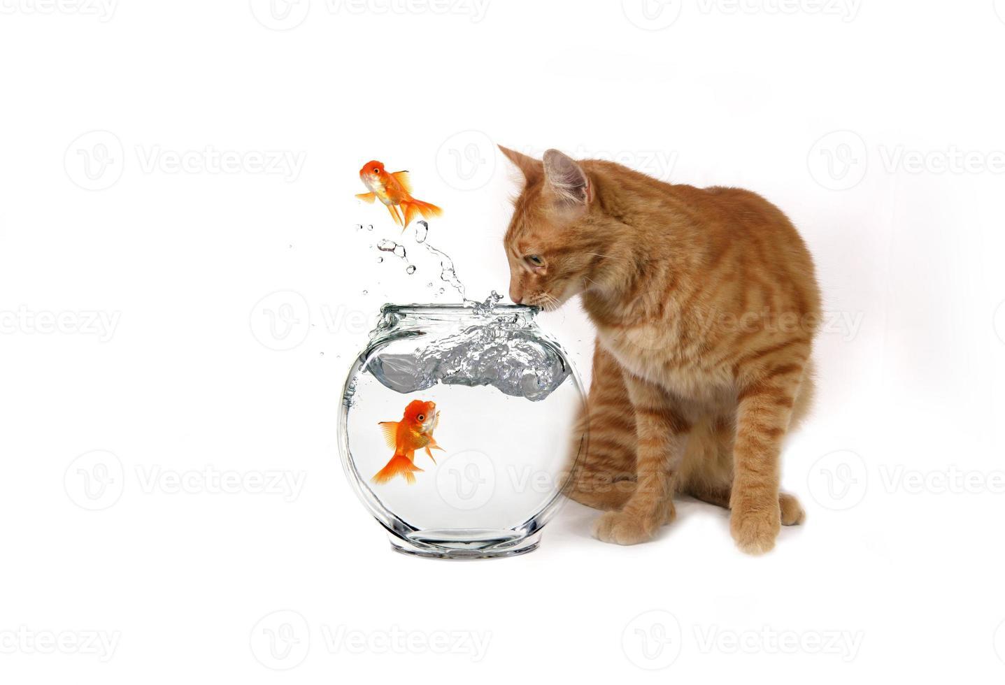 rolig bild av katt som tittar på flyktande fisk foto