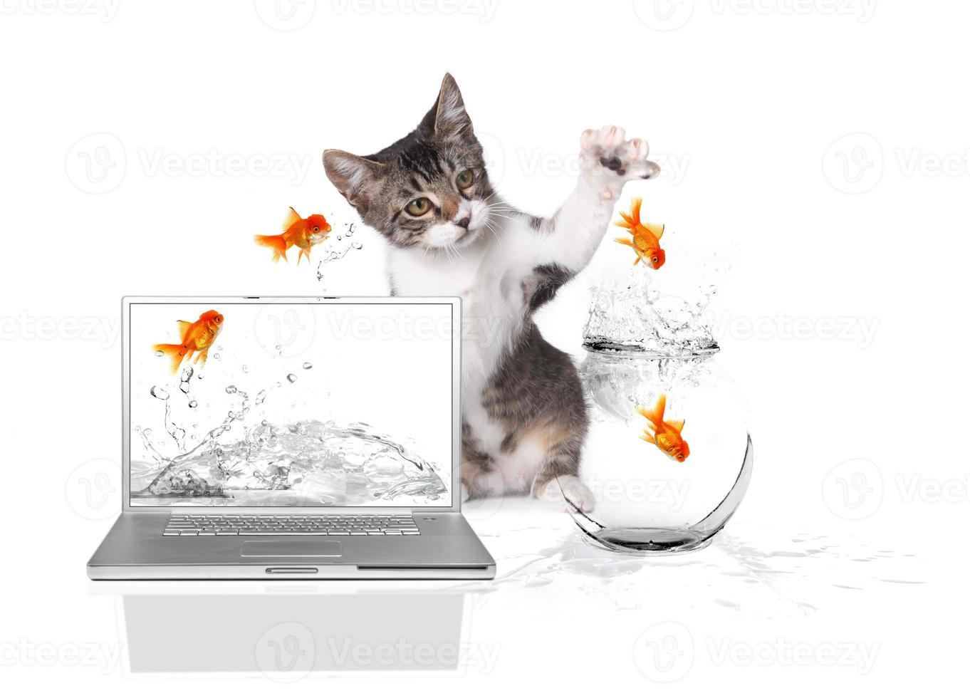 kattunge tassar på guldfiskar som hoppar ur vattnet foto