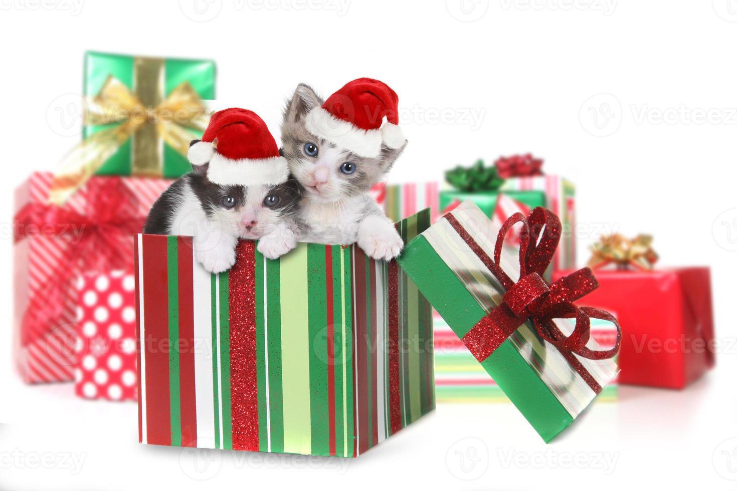 låda med kattungar i julklapp foto