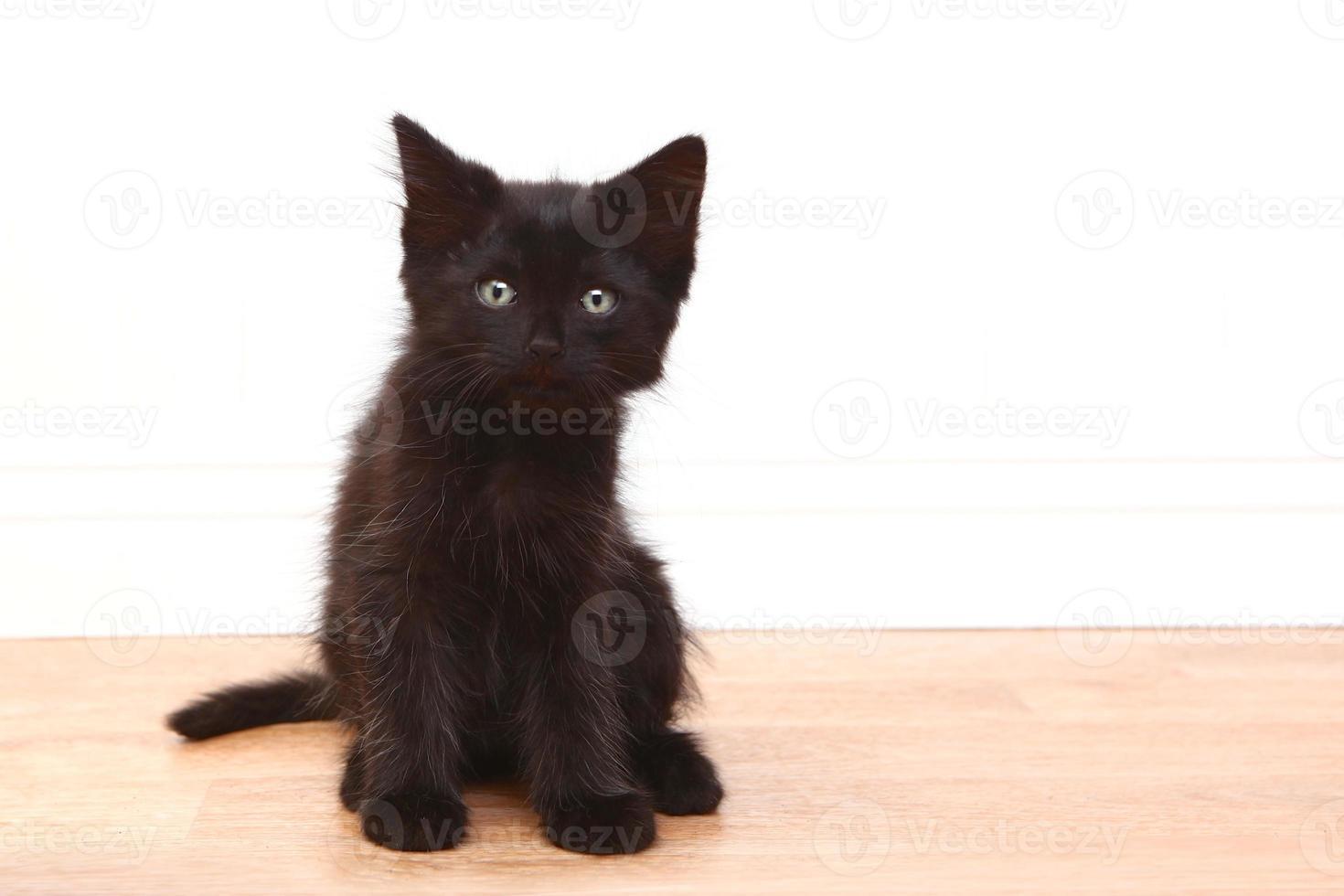 nyfiken svart baby kattunge på vitt foto