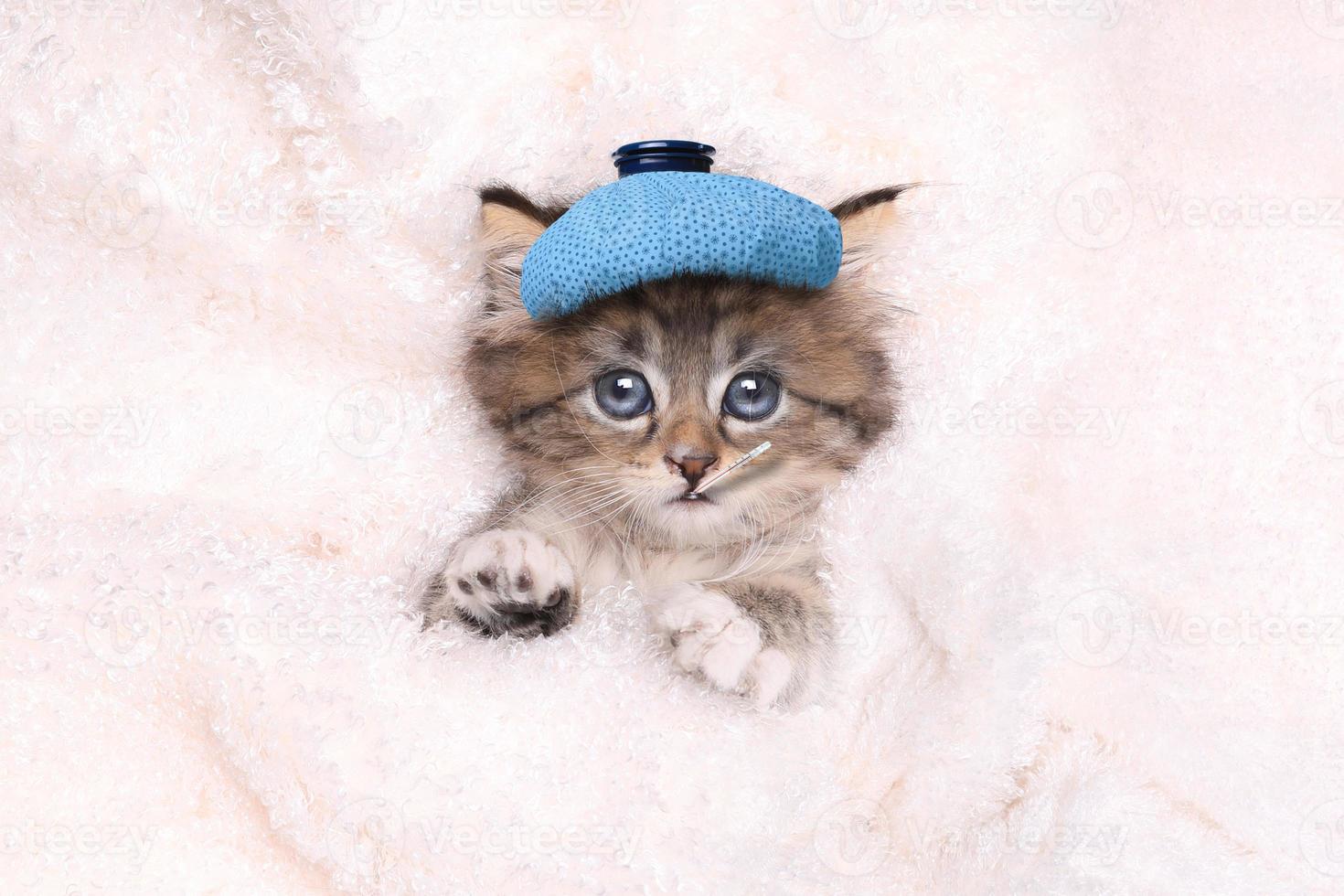 sjuk kattunge med ispåse och termometer foto