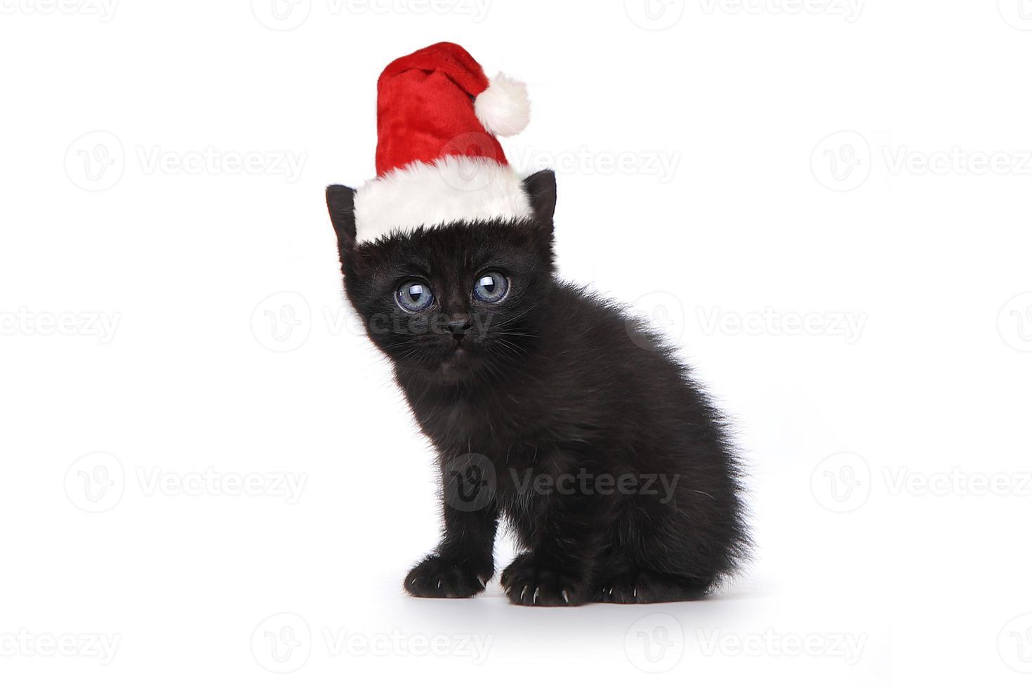 svart kattunge bär en tomtehatt på vitt foto
