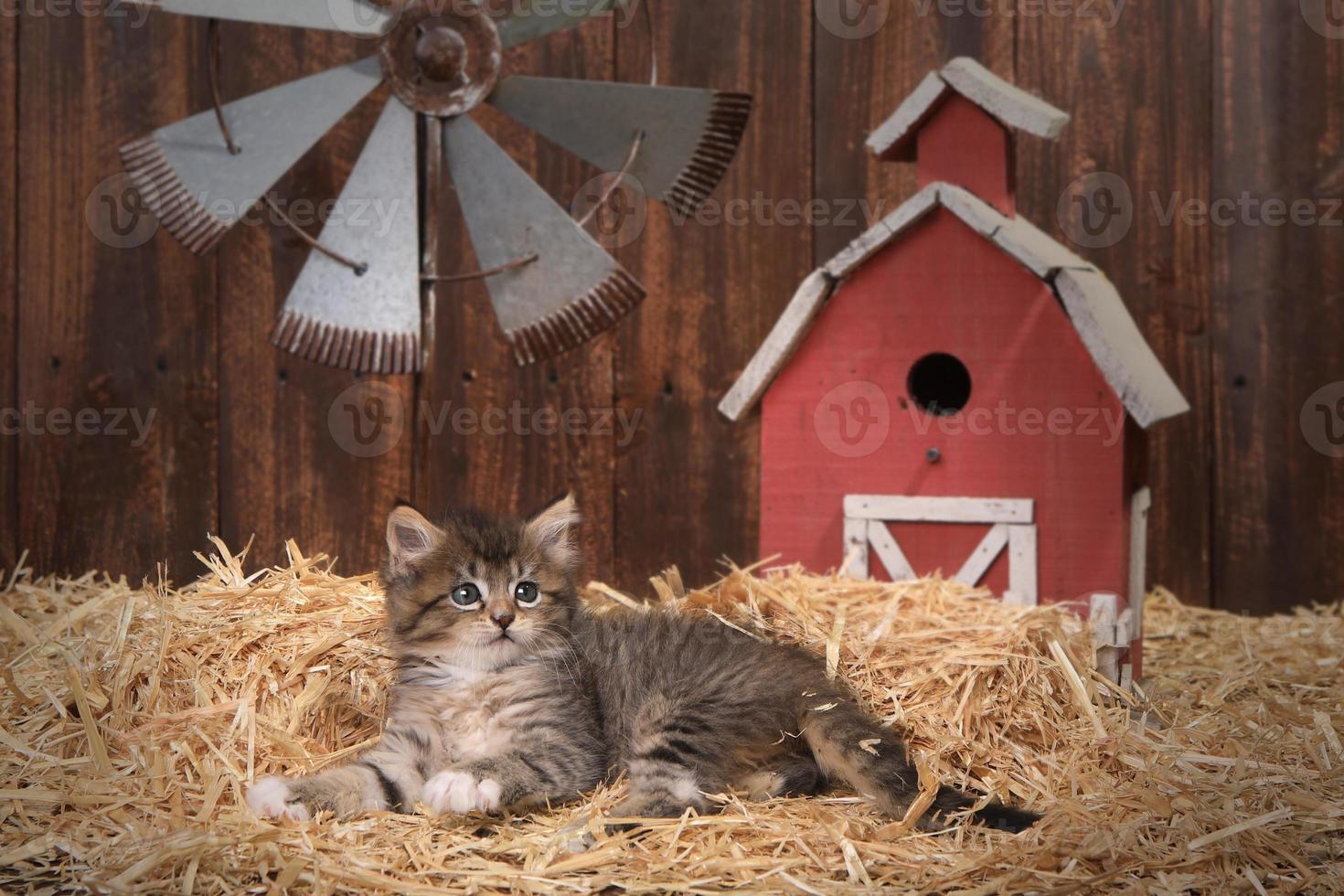 söt kattunge i en ladugård med halm foto