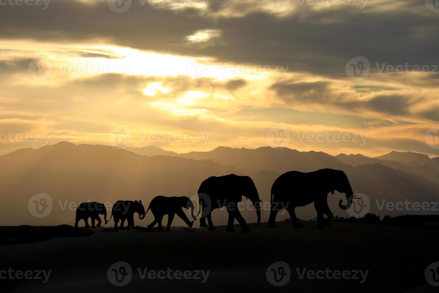 bedårande afrikansk elefantfamilj på fem vid solnedgången foto