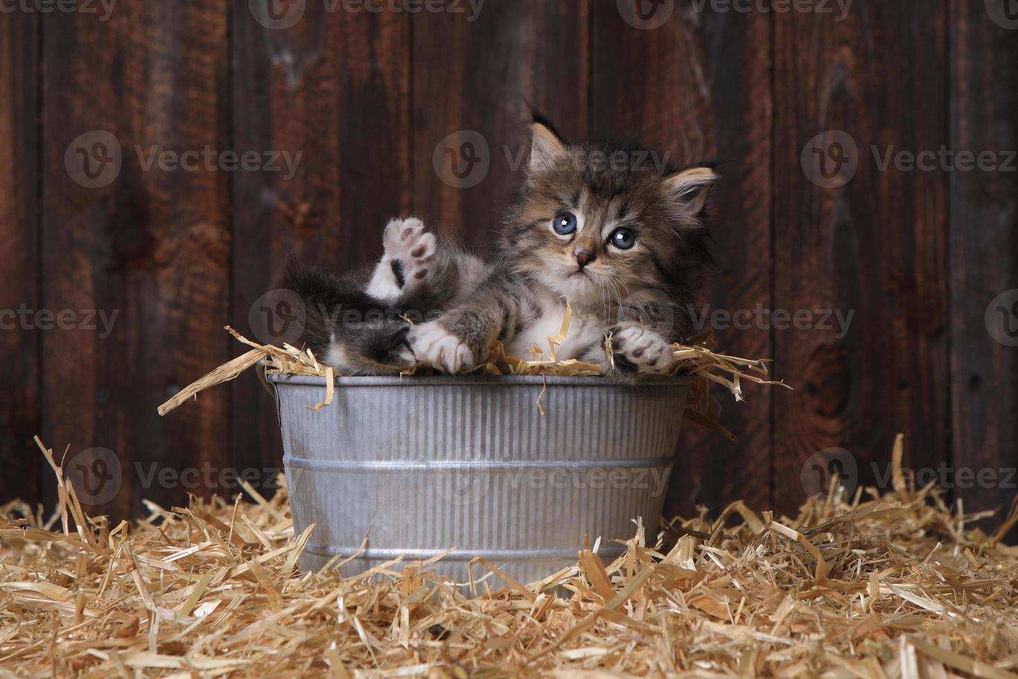 söt kattunge med halm i en ladugård foto