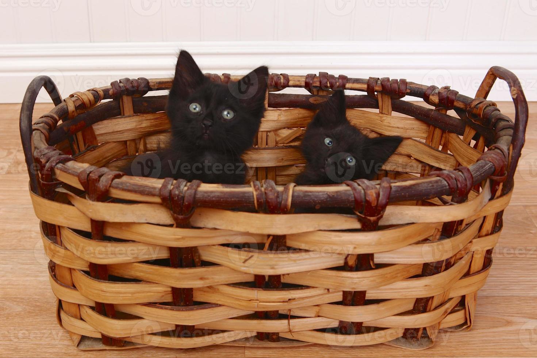 nyfikna kattungar inuti en korg på vitt foto