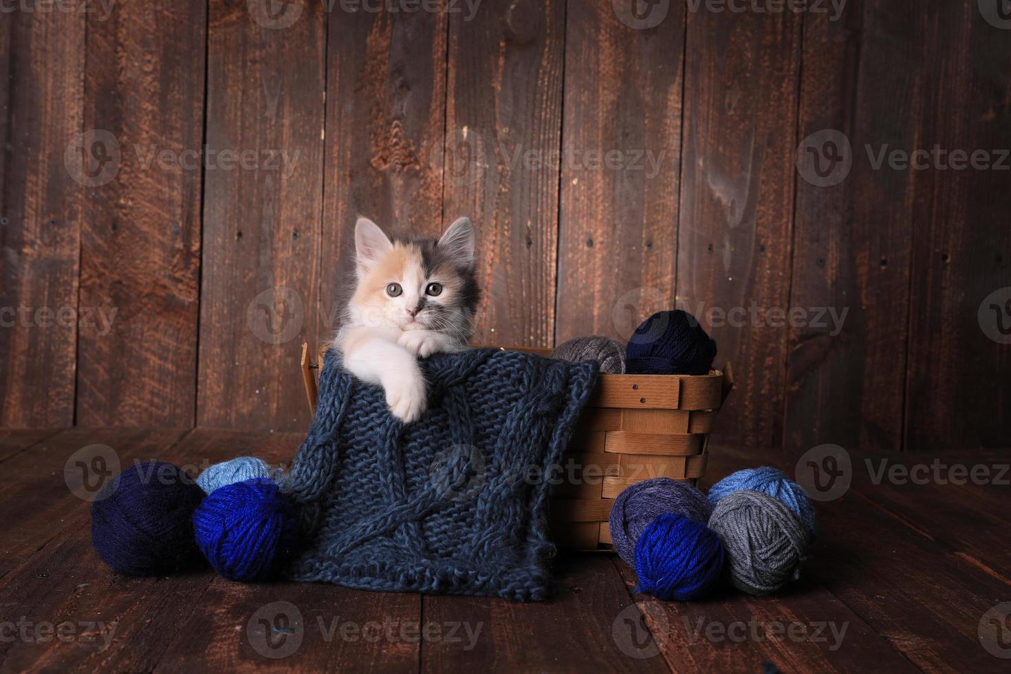 kattunge i en korg med stickgarn på träbakgrund foto