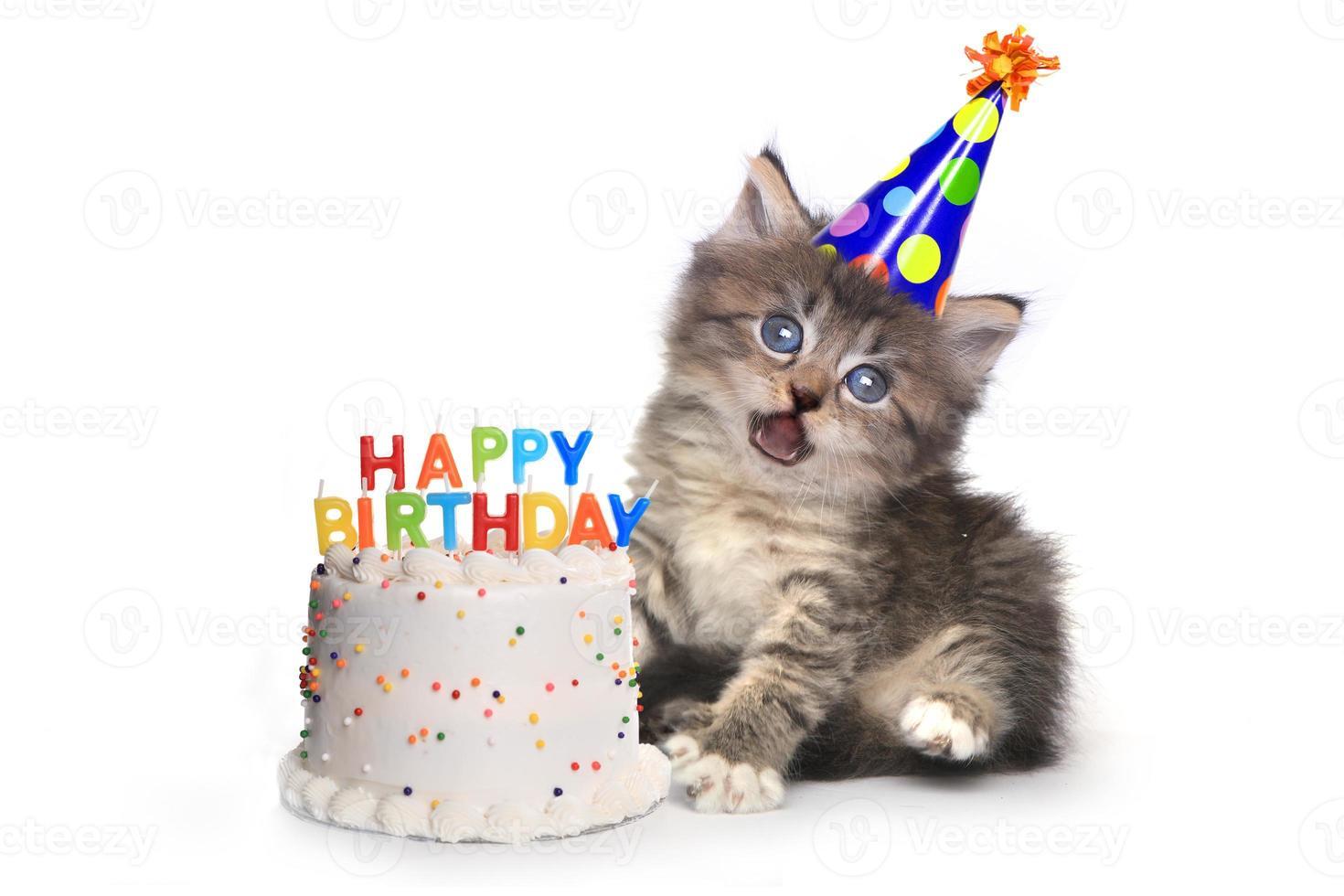kattunge på vitt med födelsedagstårtsfirande foto