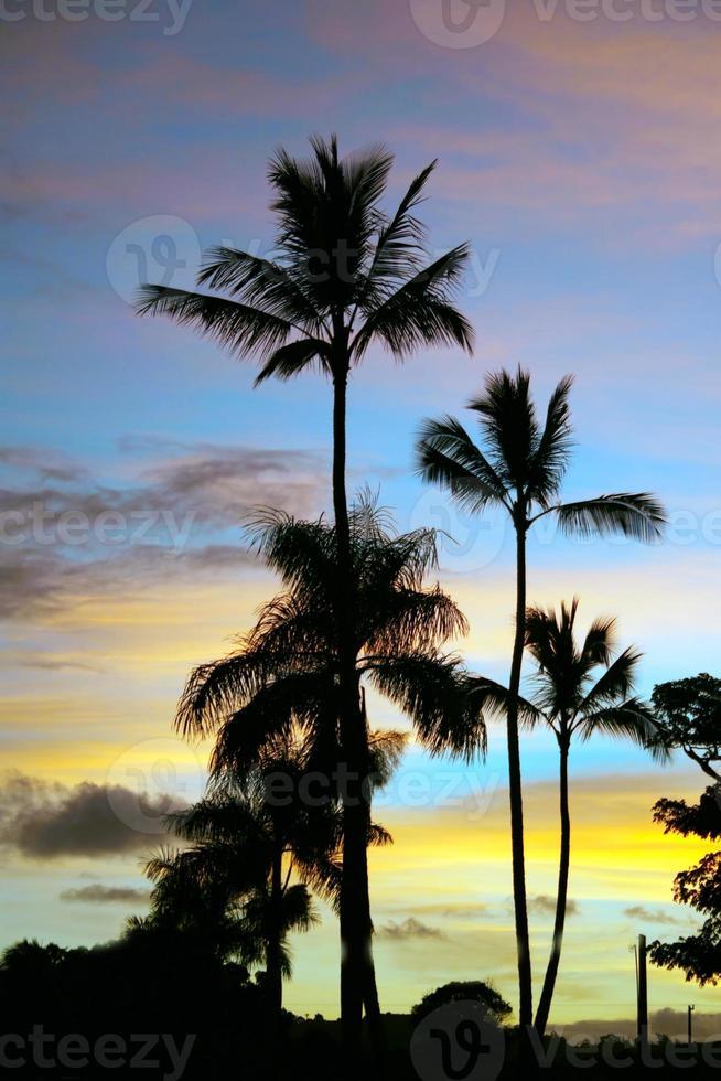 vykort perfekt kauai silhuett solnedgång palmer foto