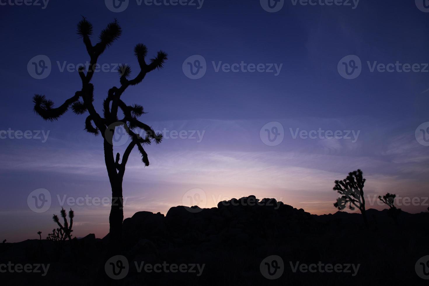 Joshua Tree Silhouette vid solnedgången med blå himmel foto