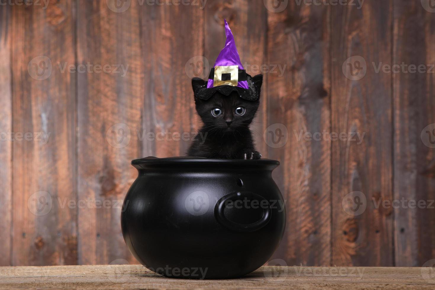 bedårande svart halloween häxkatt foto