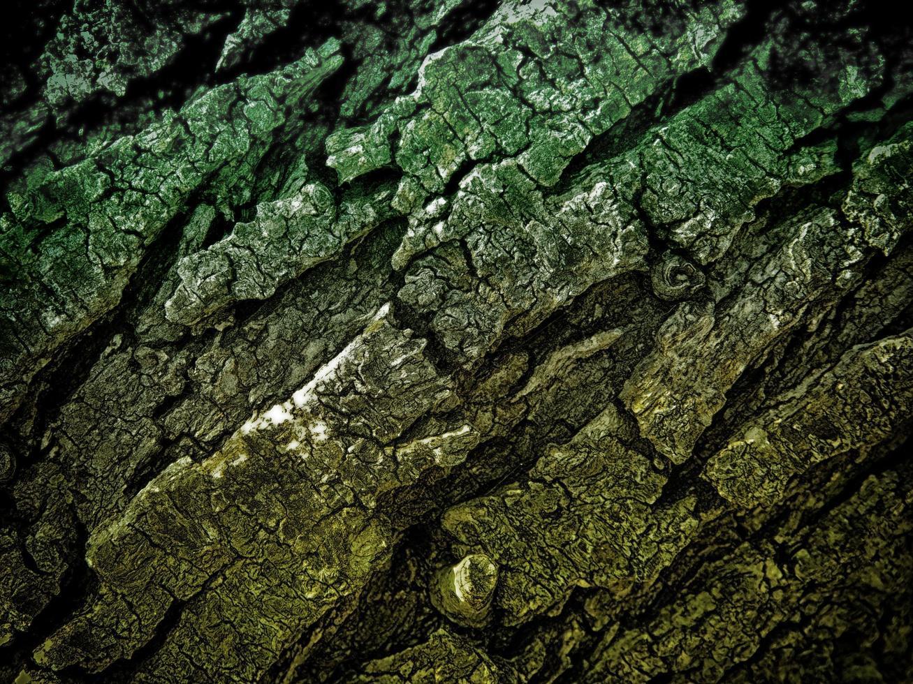 mörk trästruktur i trädgården foto