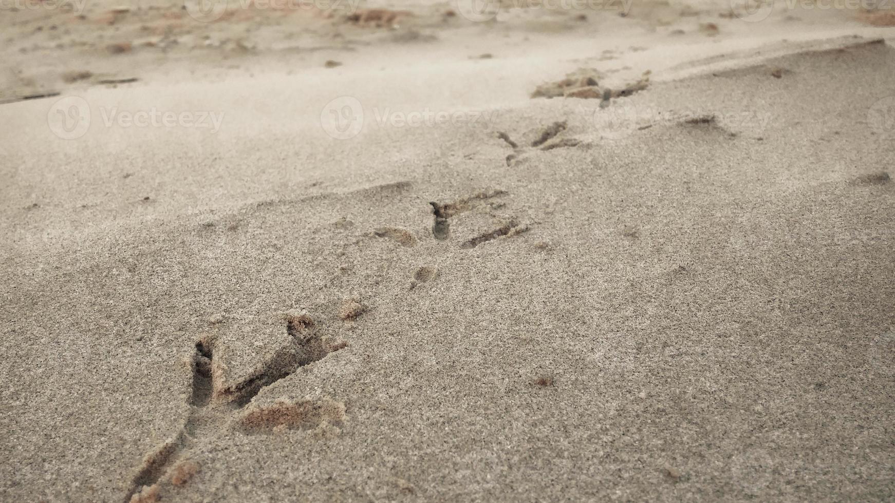 fågelfotspår på sandstrand foto