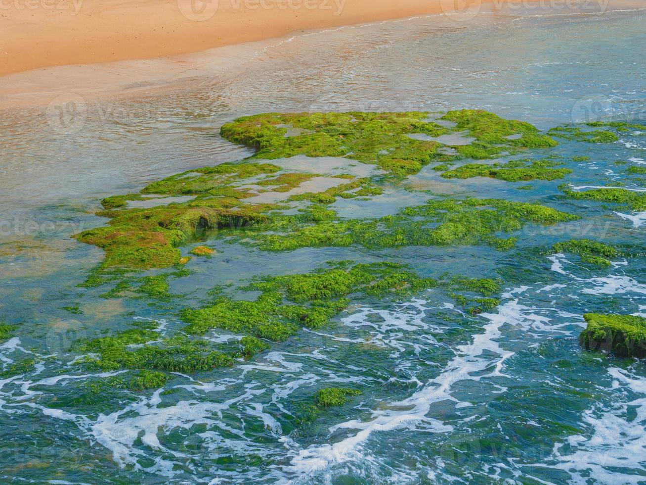 grön tång på stenarna vid Medelhavet foto