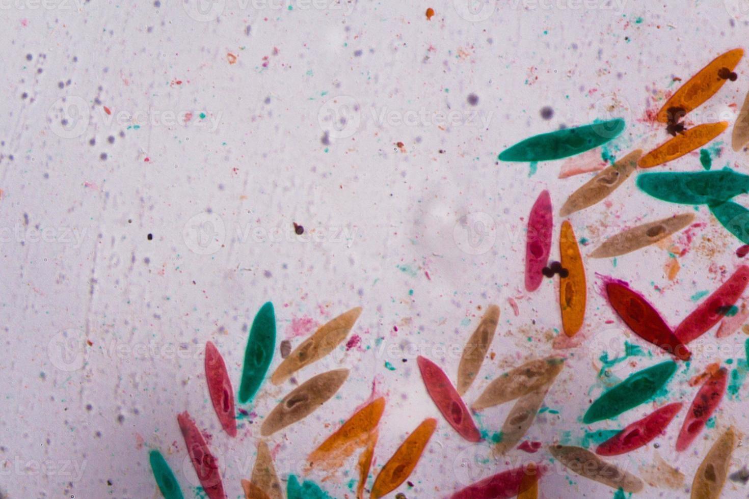 paramecium caudatum under mikroskopet - abstrakta former i färgen grönt, rött, orange och brunt på vit bakgrund foto