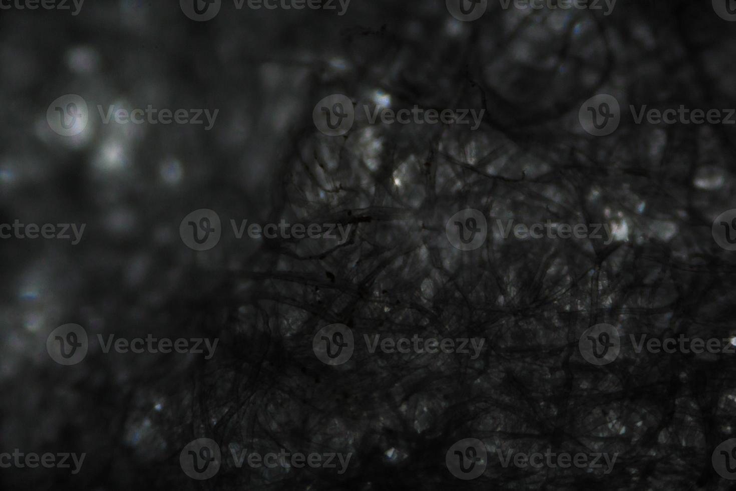 mjukpappersfibrer under mikroskopet foto