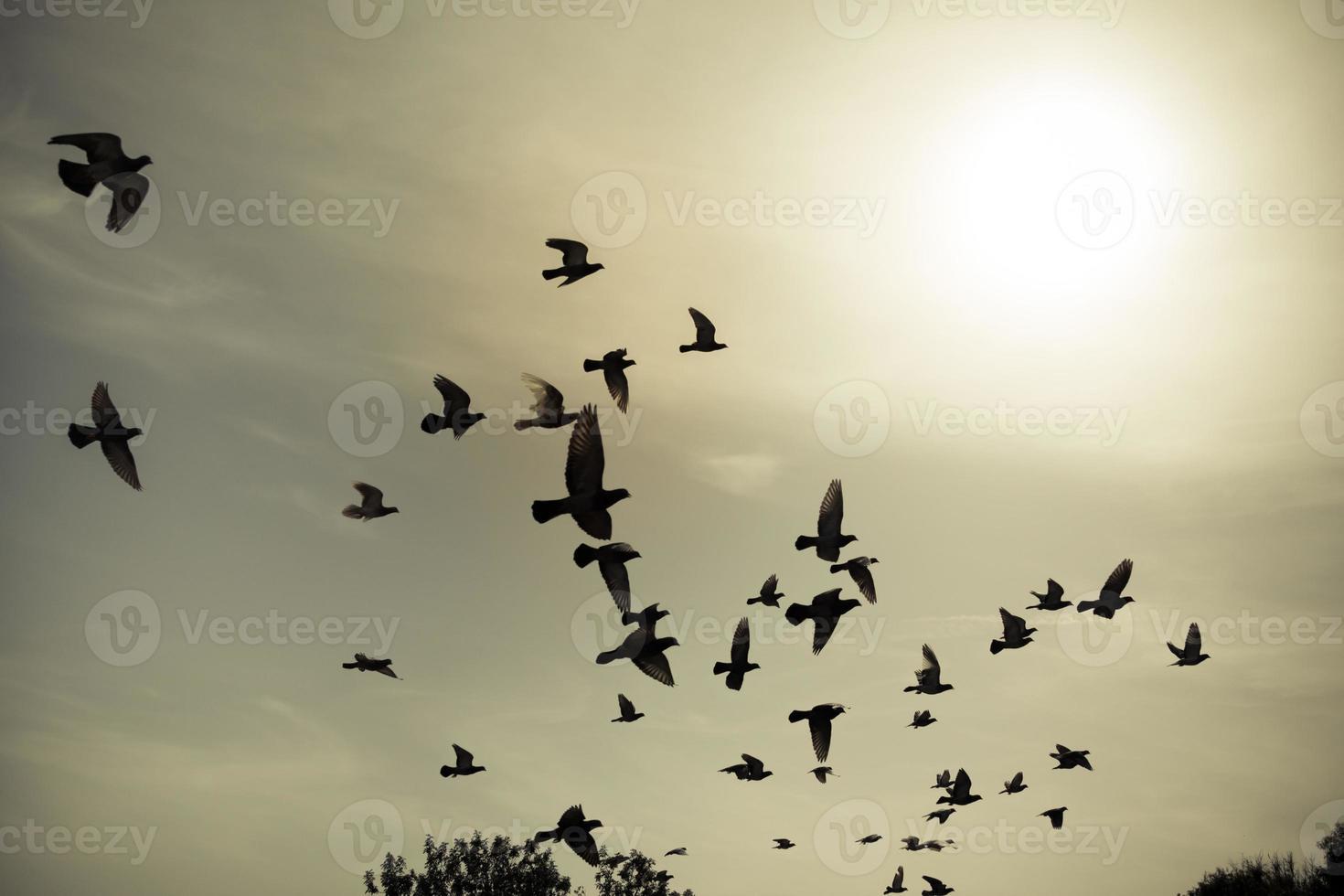 silhuetter av flygande duvor i skyn foto