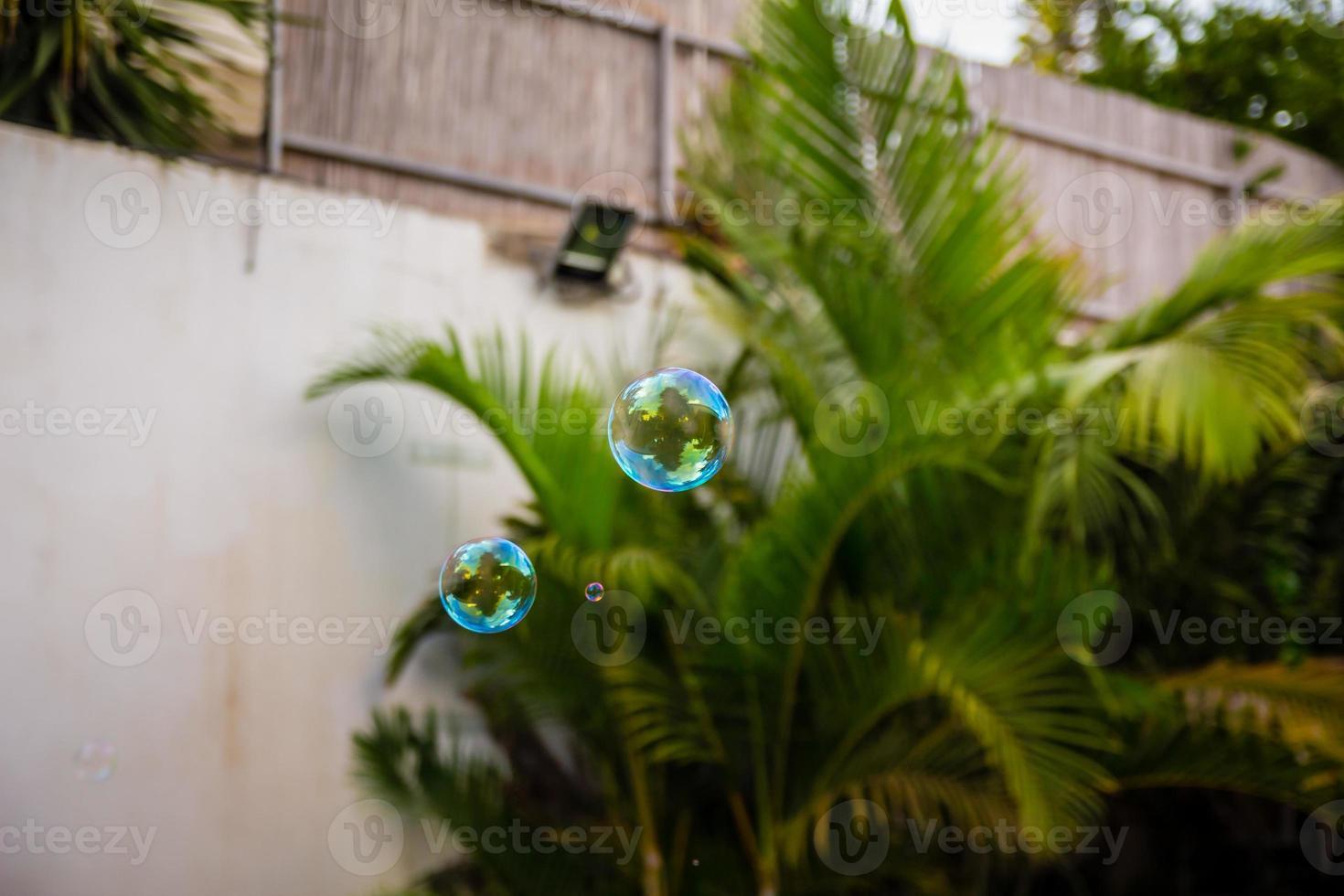 såpbubblor flyger i trädgården foto