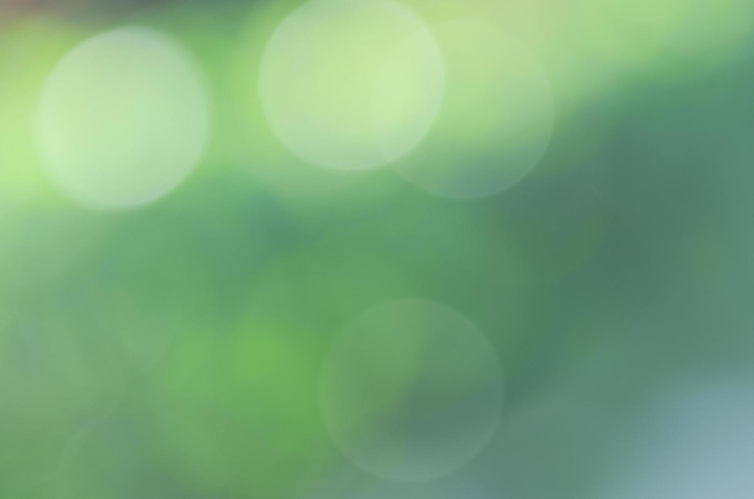 cirkel bokeh solsken på den gröna trädgårdsbakgrunden foto