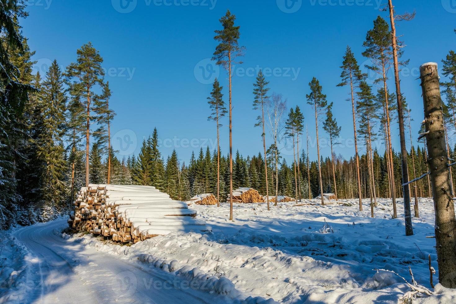 avskogningsområde i ett soligt men vinterkallt sverige foto