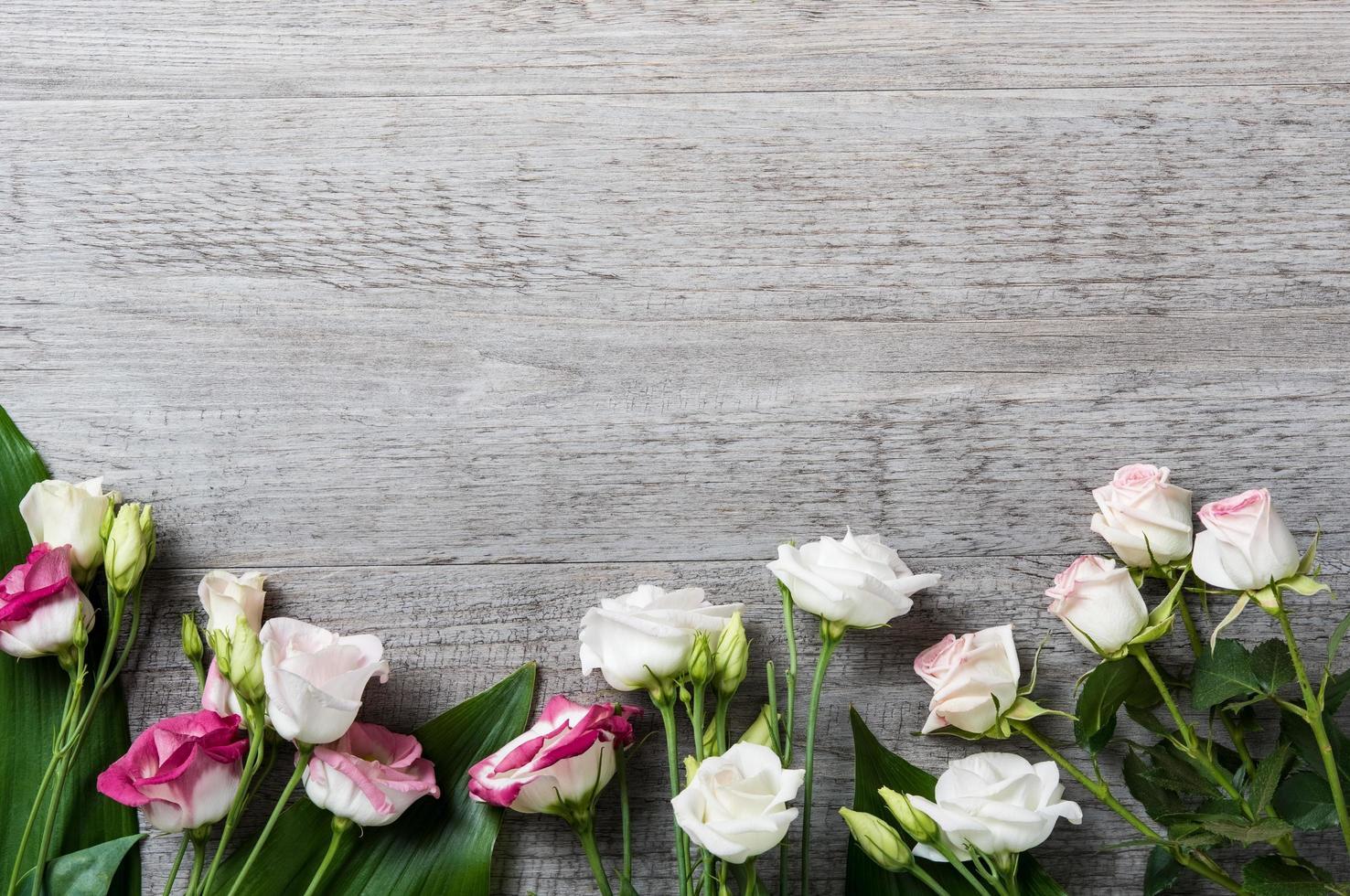 rosor på träbakgrund foto